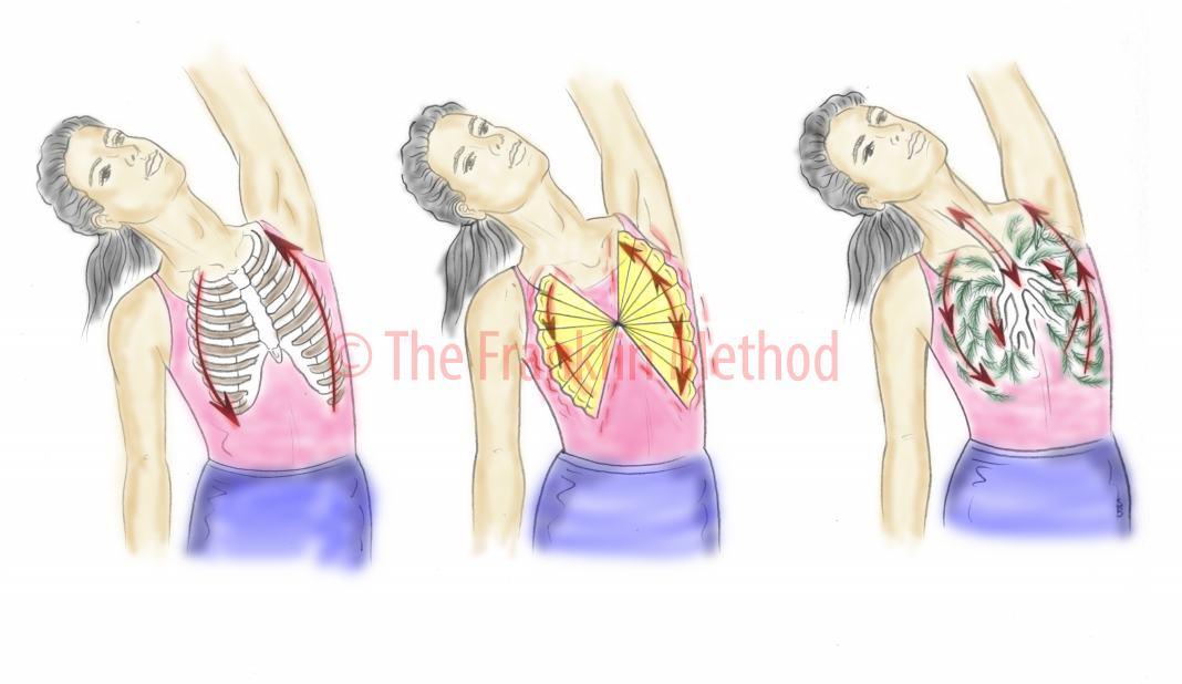 Das Zwerchfell – die Königin der Muskeln – Franklin-Methode®