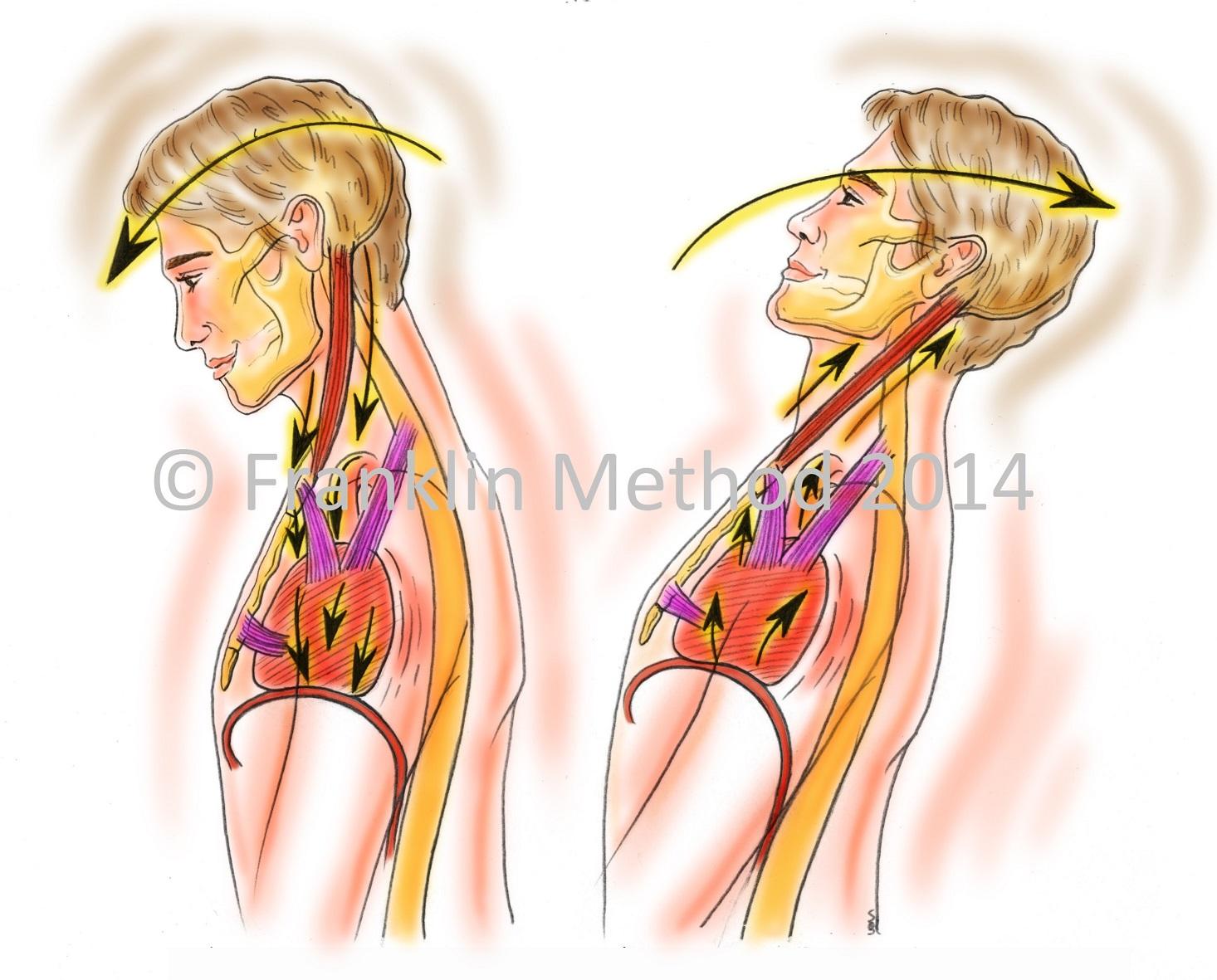 Entspannte Schultern, gelöster Nacken unter Einbezug von Gelenken ...
