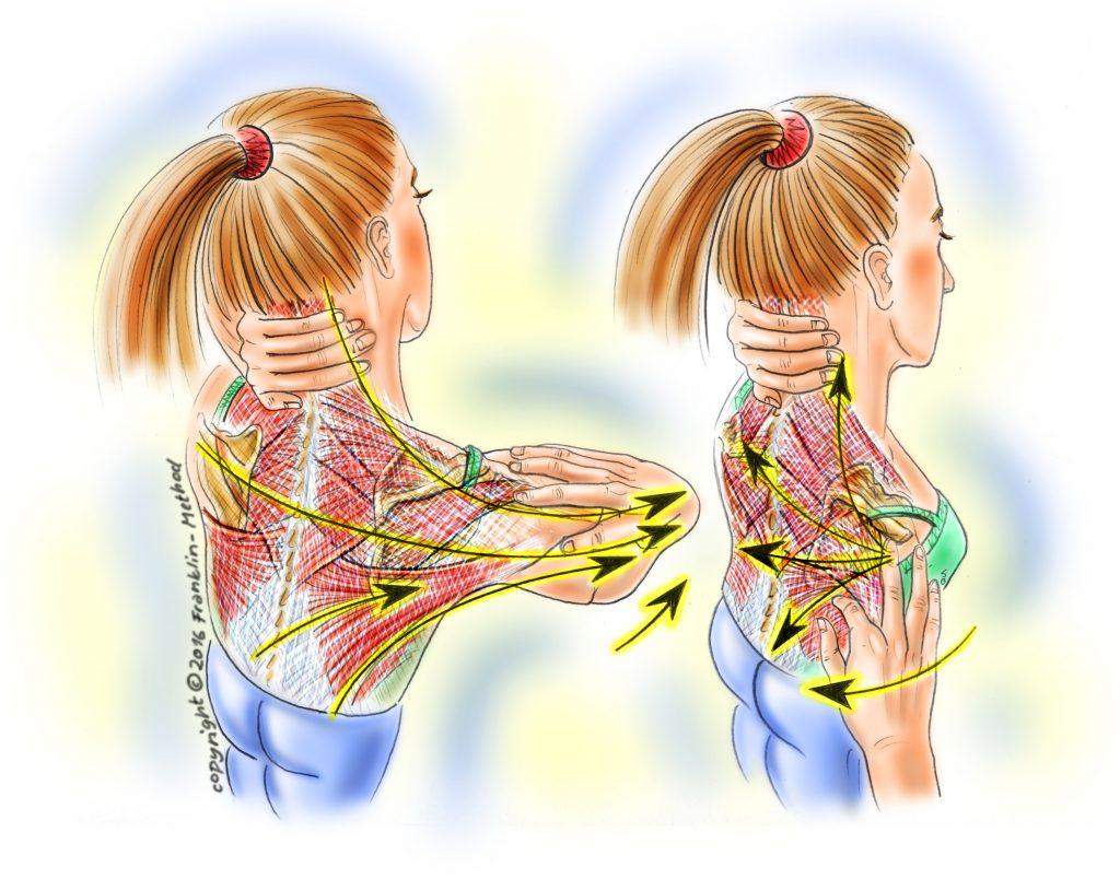 shoulderfascia