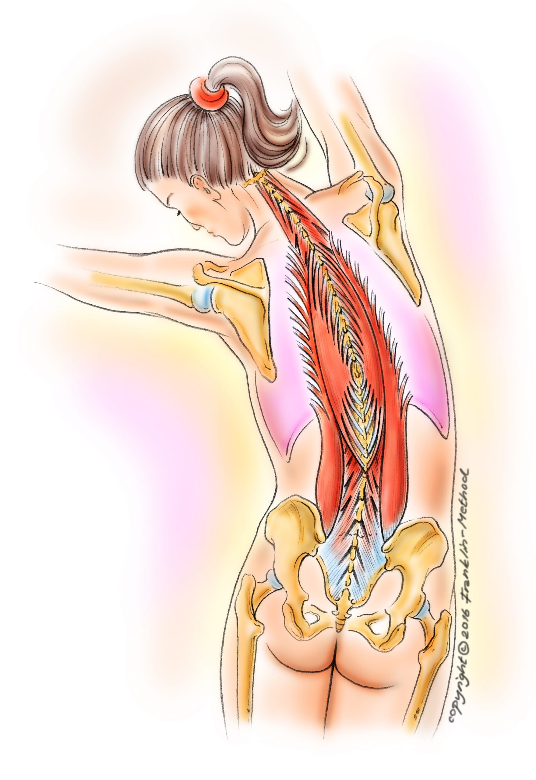 fascia-back-muscles-in-sidebendfarbig